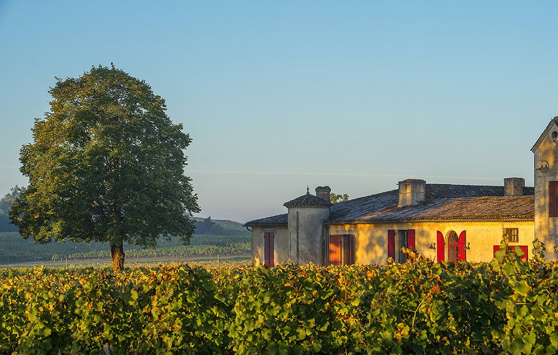 Le château Sigalas-Rabaud : Un grand Sauternes