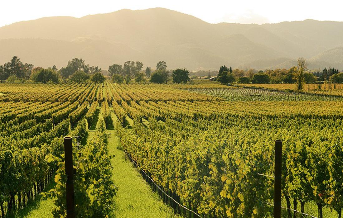 Colgin Cellars, le meilleur vignoble californien acquis par LVMH