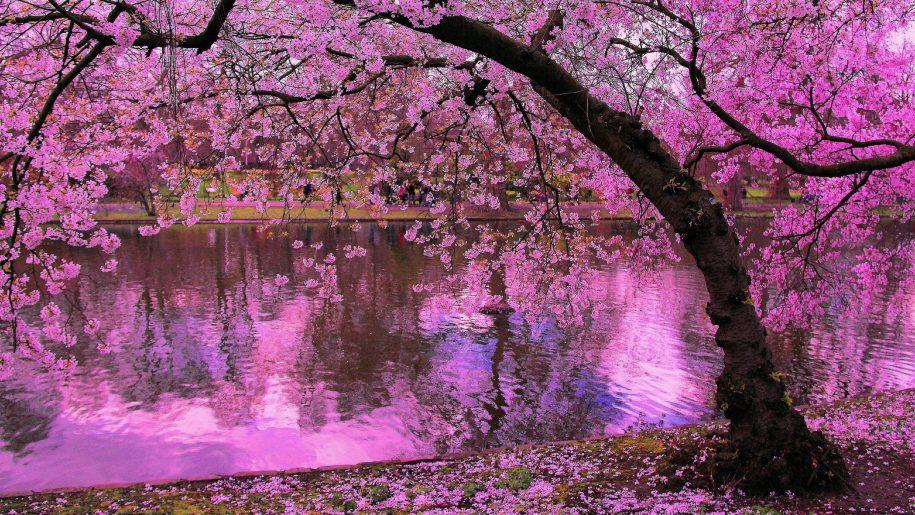 Sakura Reine Des Fleurs Du Printemps Luxe Infinity Magazine Lifestyle