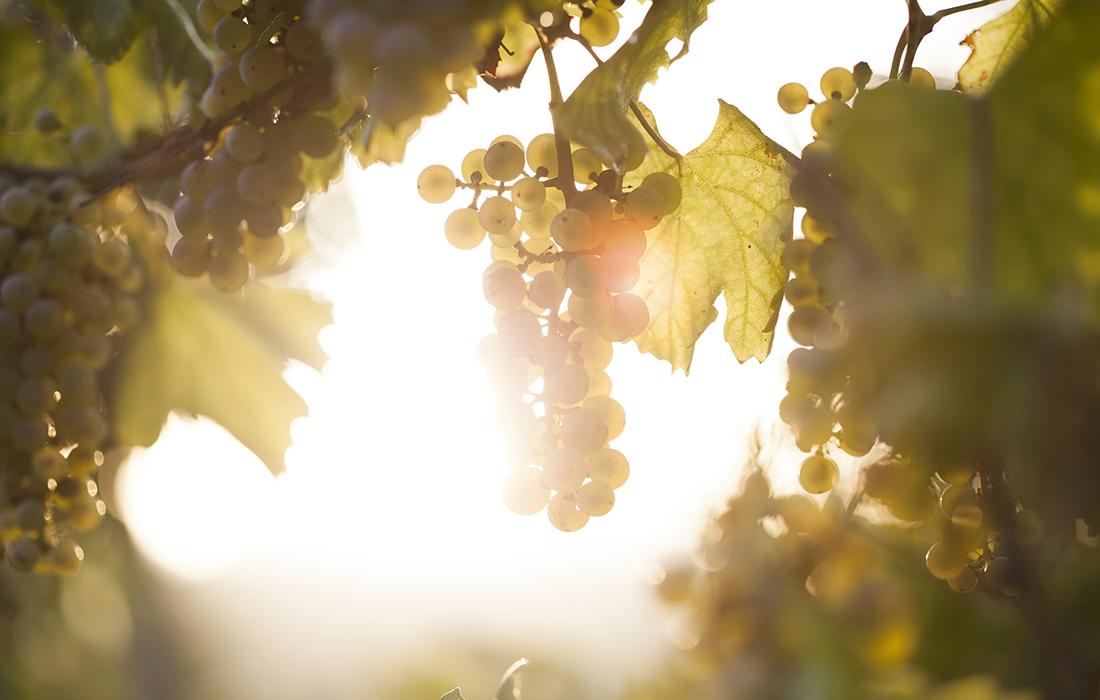 Le guide des vins Bettane+Desseauve 2020 est sorti!